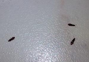Черные жуки в квартире: их виды и методы борьбы с ними
