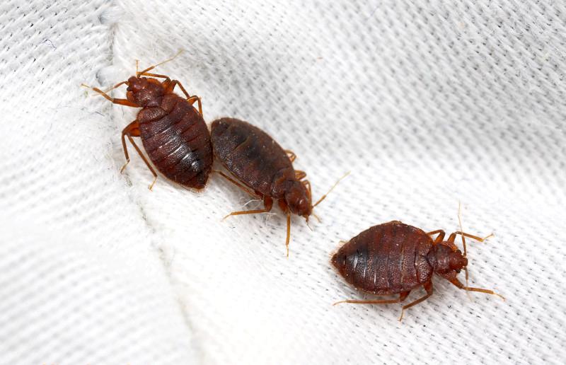 эффективно избавиться от паразитов организме