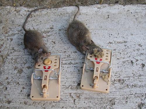 Отпугиватель крыс слушать