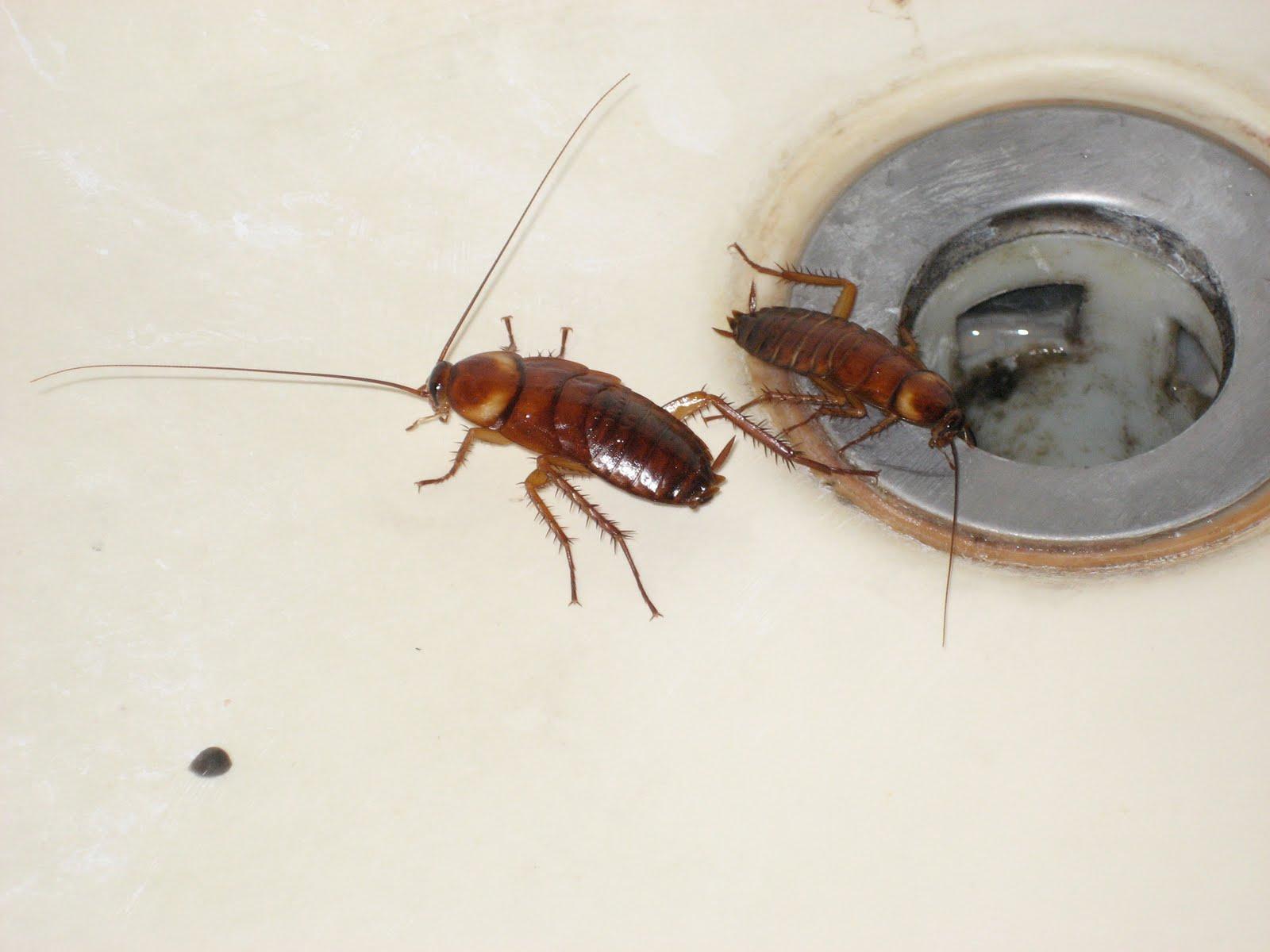 Как избавиться от тараканов в 27