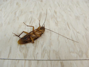 Бороться с тараканами