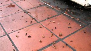 Тараканы на морозе