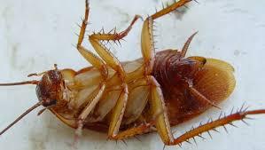 Убийство тараканов