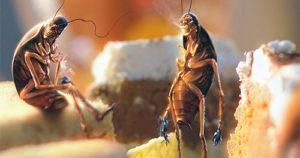 Как избавиться от маленьких тараканов в квартире