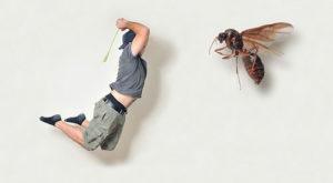 Как эффективно избавиться от мух в квартире