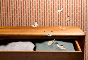 Как избавиться от моли в квартире народными средствами