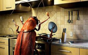Как можно избавиться от тараканов в квартире в домашних условиях