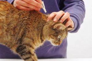 устранения блох у кошек