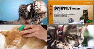 кошачьи-капли