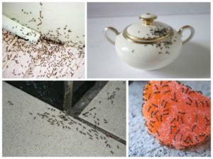 Как можно избавиться от домашних муравьев навсегда