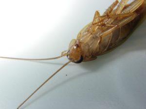 смерть таракана