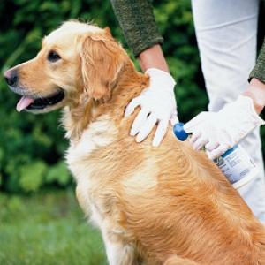 Как вывести блох у собаки в домашних условиях: эффективные средства