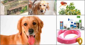 Как вывести блох у собаки