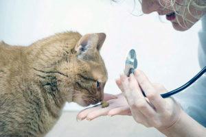 средства выбрать от глистов у котов