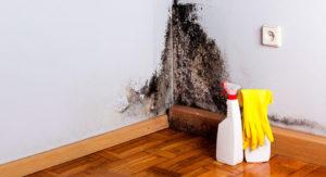 Как эффективно избавиться от вирусов и грибков в помещении