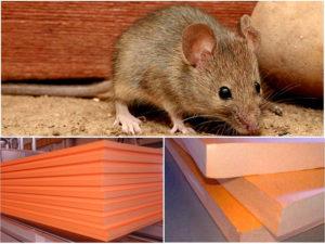Какой утеплитель не будут грызть мыши