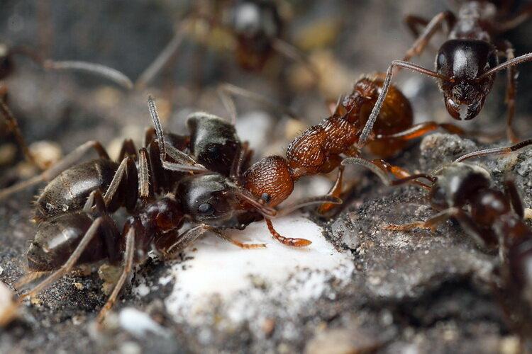 Химические способы борьбы с муравьями